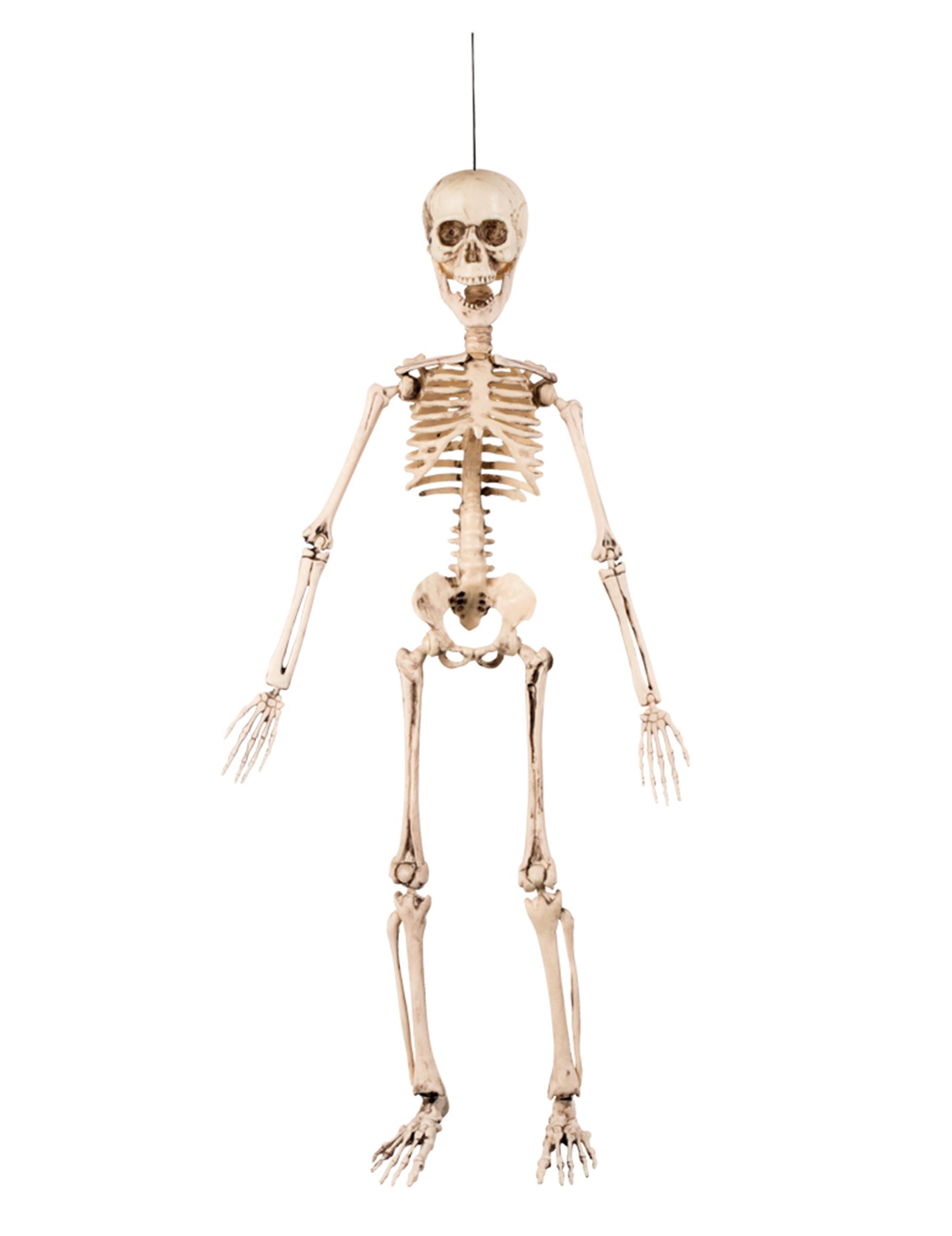 decorazione di halloween scheletro articolato