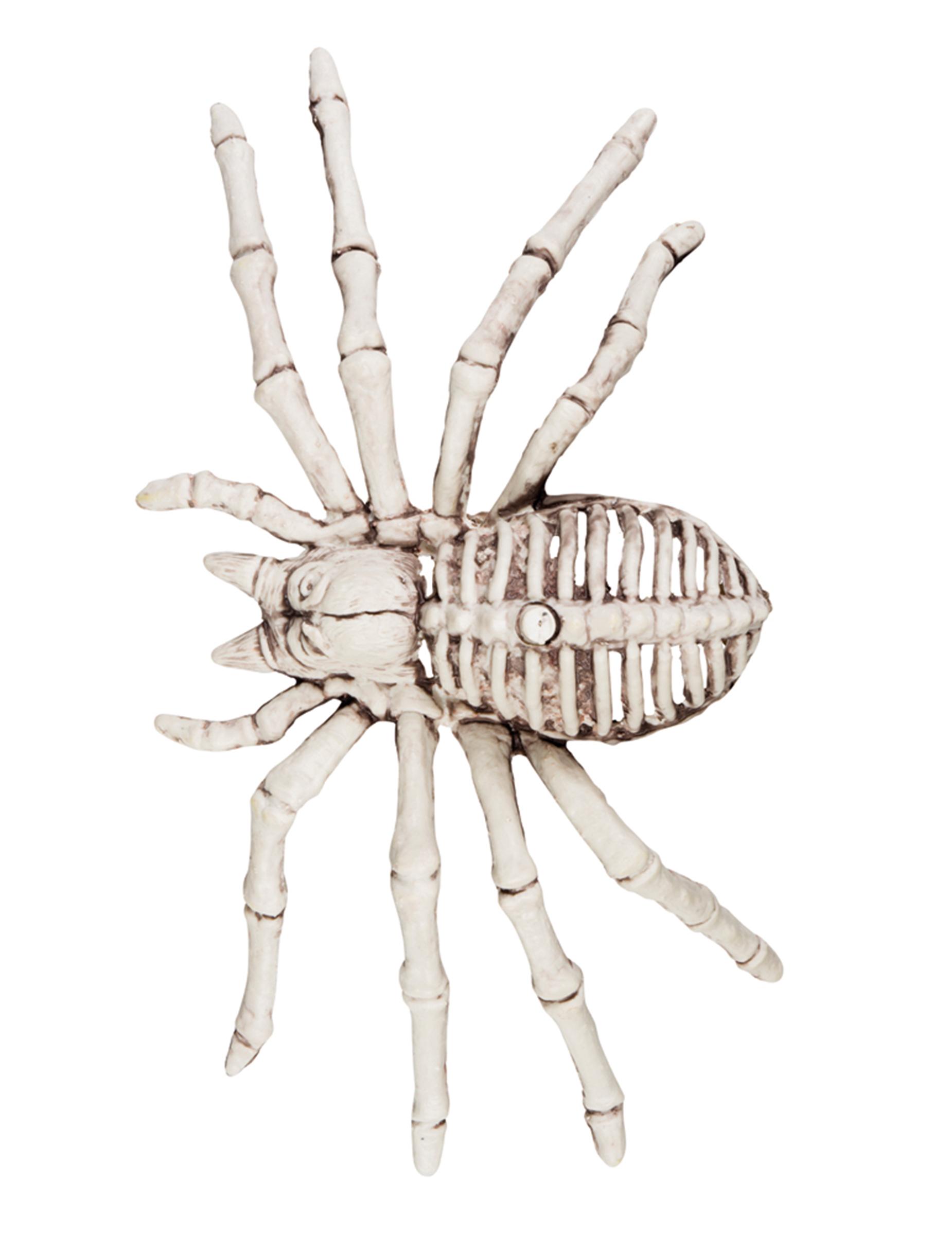 decorazione di halloween ragno scheletrico addobbi e