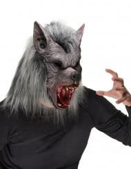 Maschera da lupo mannaro adulto Halloween