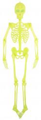 Scheletro articolato decorativo Halloween