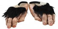 Scarpe piedi di scimpanzé adulto