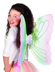 Ali farfalla adulto