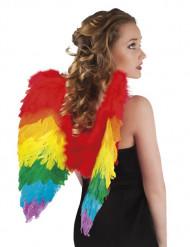 Ali multicolori