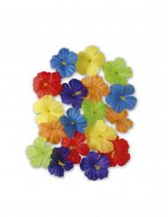 Fiori multicolori