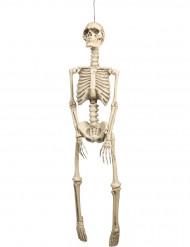 Decorazione scheletro Halloween da appendere