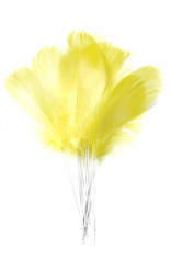 12 piume gialle con stecchino