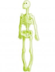 Decorazione di Halloween: scheletro fluorescente articolato