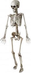 Decorazione Halloween: scheletro da appendere cm 120