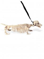 Scheletro cane al guinzaglio