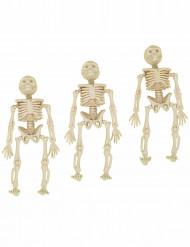 3 decorazioni da sospendere scheletri