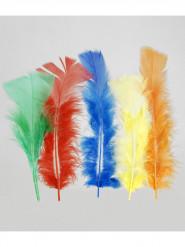100 piume colorate