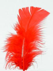 100 piccole piume rosse