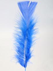 100 piume blu