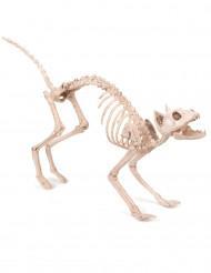 Decorazione per halloween scheletro di gatto