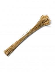Mazzo di spighe di grano 60 cm