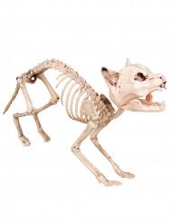 Decorazione scheletro di gatto 60 cm halloween