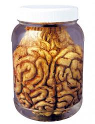 Vaso con cervello 14 cm halloween