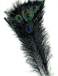 Piuma di pavone verde blu