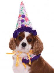 Vestito da clown per cani