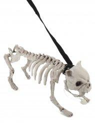 Decorazione per Halloween Cane Scheletro