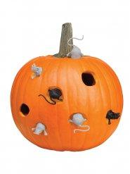 Kit 8 pezzi per perzonalizzare zucca di halloween con topi