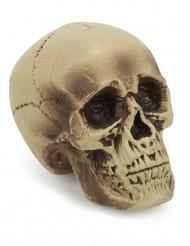 Decorazione per halloween Cranio umano