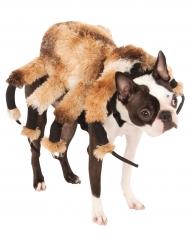 Costume da ragno gigante per cane
