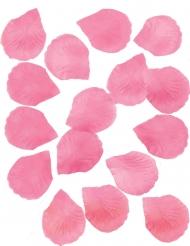 288 petali fucsia
