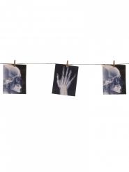 Ghirlanda con radiografie 1.60 m