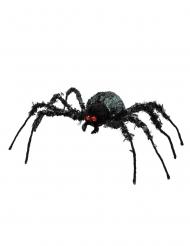 Ragno gigante 43 x 46 cm