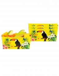 4  Ciotole in cartone tucano giallo