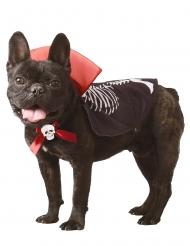 Costume vampiro per cane