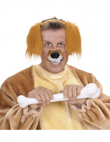 Naso cane adulto-1