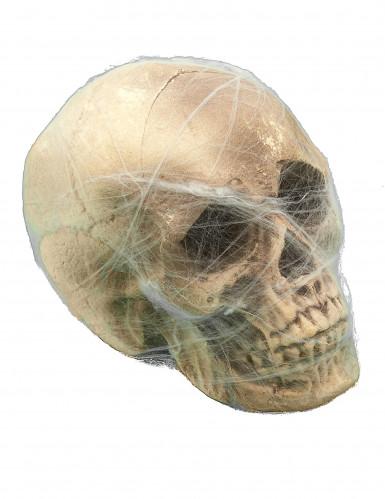 Decorazione per halloween Teschio con ragnatele