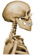 Adesivo per macchina scheletro