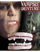 Dentiera da Vampiro adulto Halloween